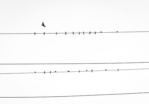 Birds on Power Line