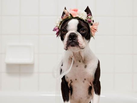 Bathtub Reglazing Frequently Asked Questions