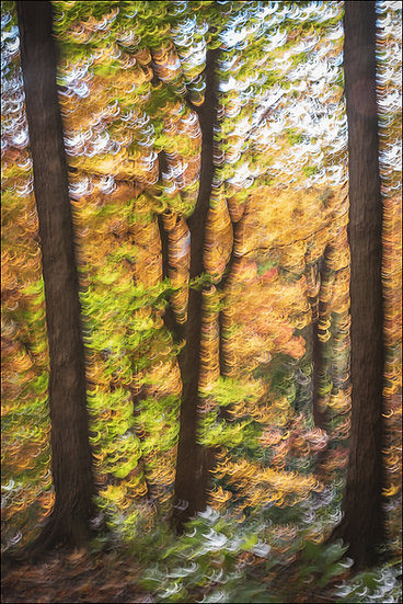 Abstract photograph of a grove of trees, dark trunks surrounded by blurred autumn-coloured leaves