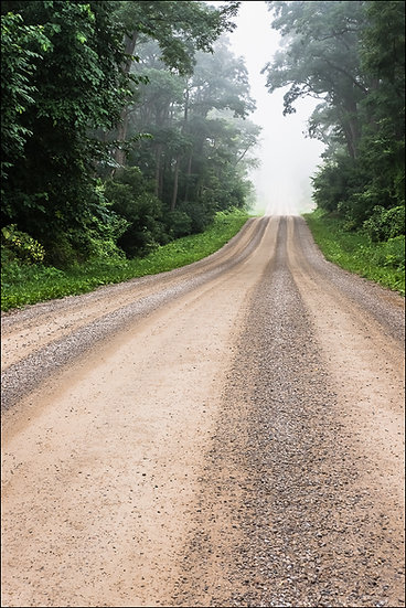 A gravel road, lined with lush greenery, stretches into the distance on a foggy morning