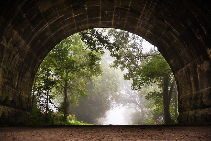 View of a tree-lined gravel road from inside a tunnel on a misty summer morning