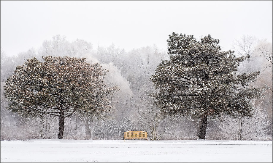 Two large snow-covered trees flanking a yellow bench in winter