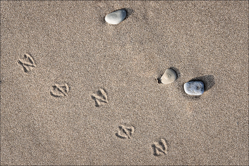 Overhead view of three stones and five seagull footprints in the sand