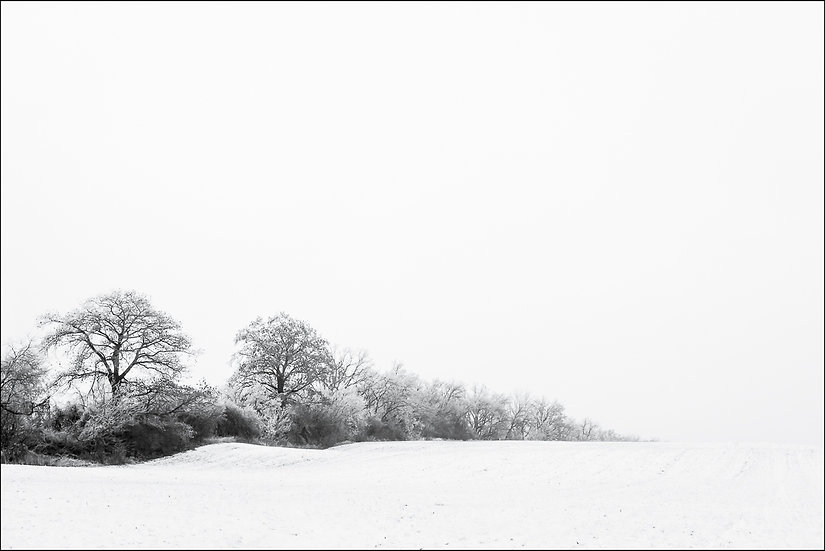 Minimalist, black and white winter photograph of a line of trees shrinking in the distance