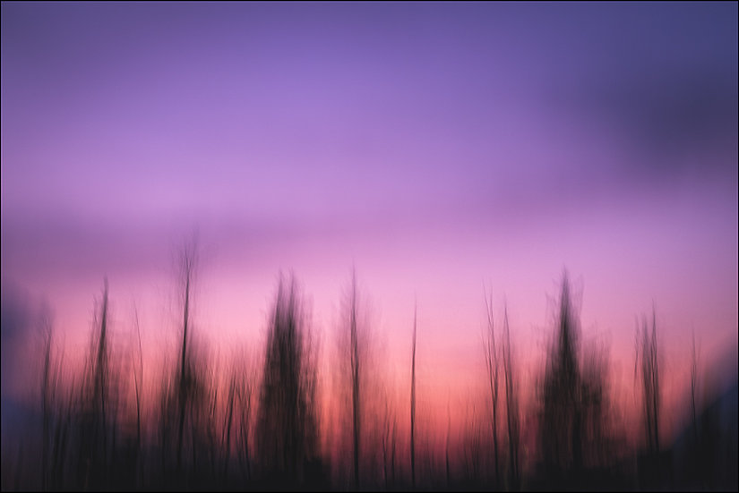 Abstract photograph of trees silhouetted against a purple sunset