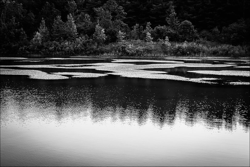 Black and white photograph of trees reflected in the surface of a pond