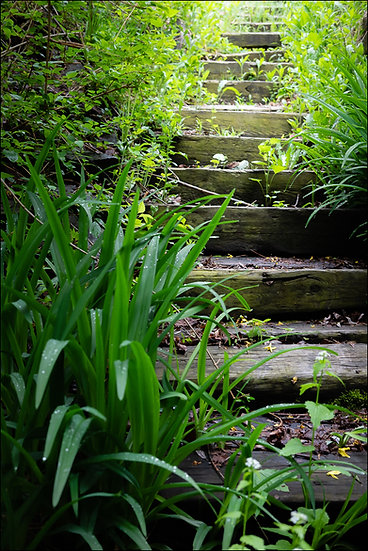 View of old wooden steps winding upwards through lush greenery