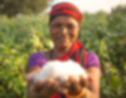 Woman_holding_cotton.jpg