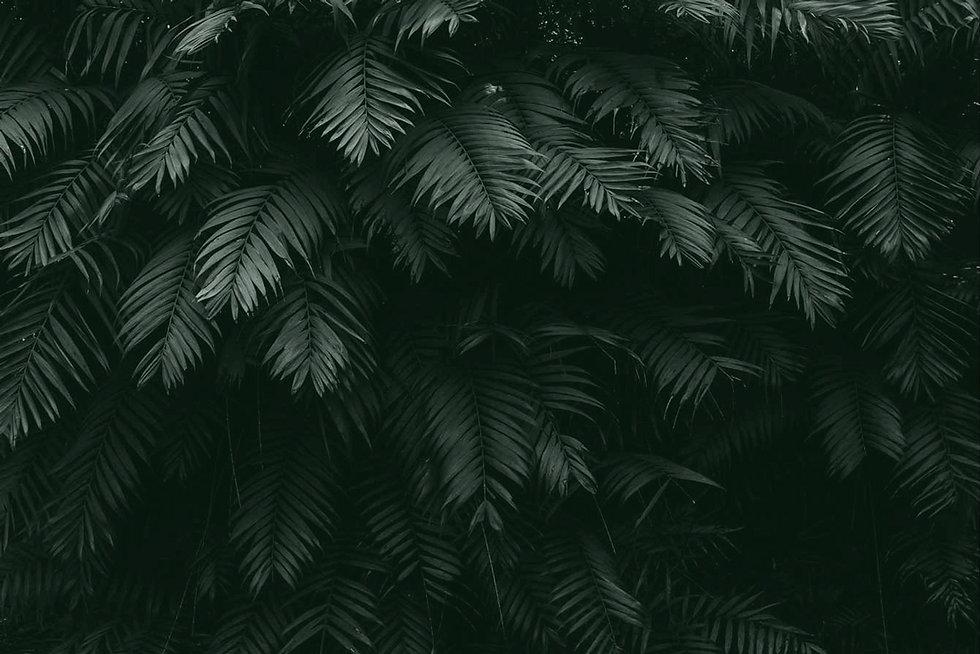 Moringa_Close_up_Background.jpg