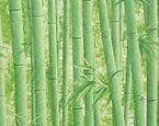 Papel de Parede Bamboo
