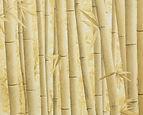 Papel de Parede Bamboo Seco