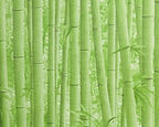 Papel de Parede Bambu Verde