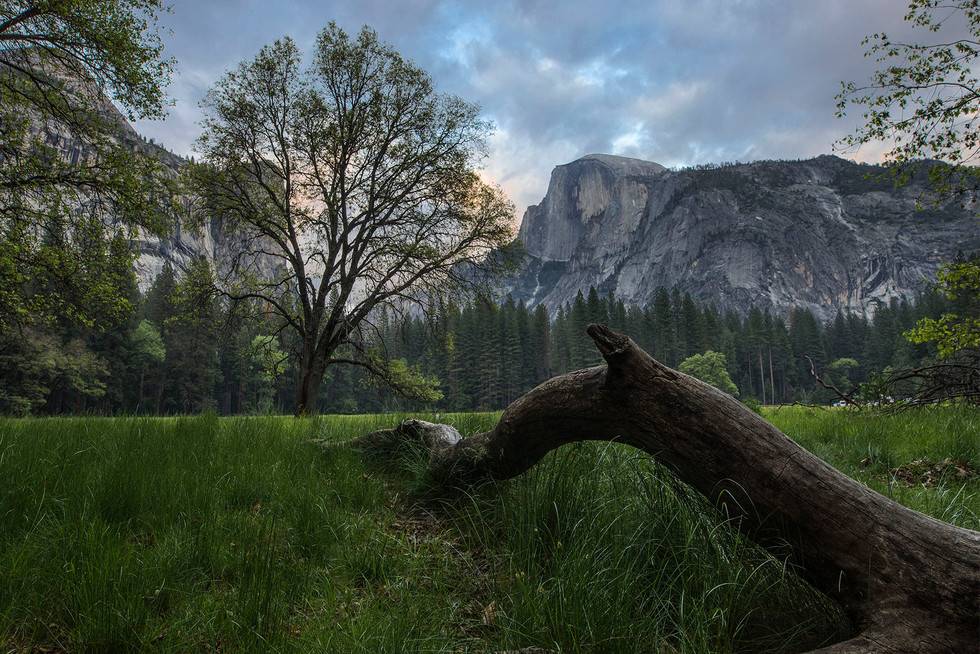 Half Dome Meadow