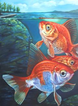 Goldfish, 2012
