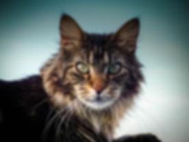 animal-cat-cat-face-416138.jpg
