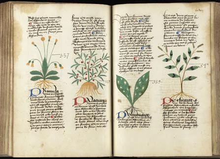 Le piante medicinali