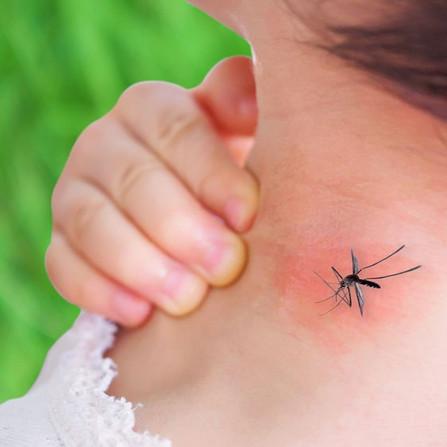 Malaria: una piaga tutt'altro che sconfitta