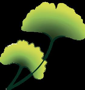plante-3.png