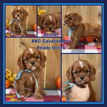 Archer collage.jpg