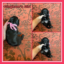 Gingham pink girl.jpg