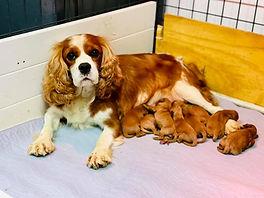 Rosa and pups.jpg