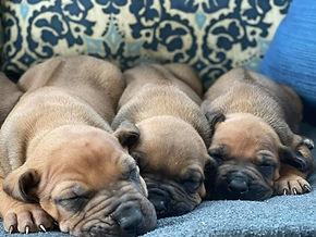 Cozy pups 2.jpg