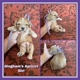Gingham purple girl.jpg