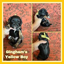 Gingham yellow boy.jpg