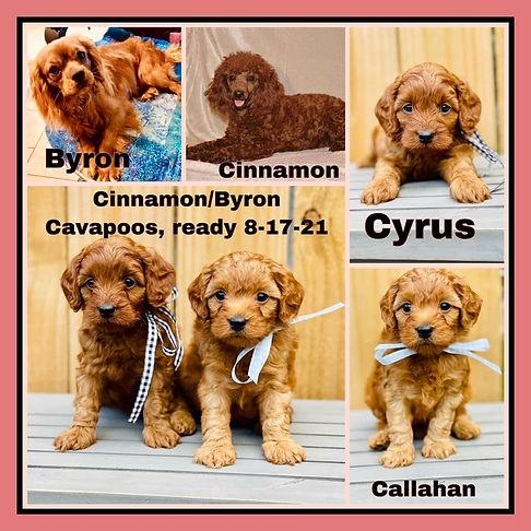 Cinnamon and Byron Collage.jpg