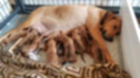 Sahara and pups 2.jpg