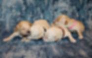 TA poodle group 3.jpg