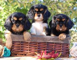 Trio of Cavs