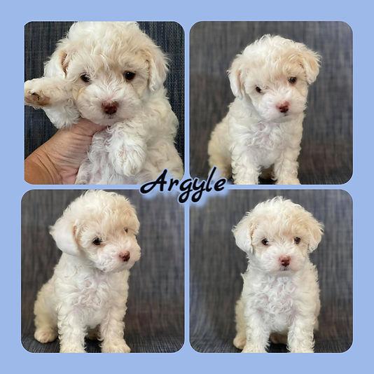 Argyle collage.jpg