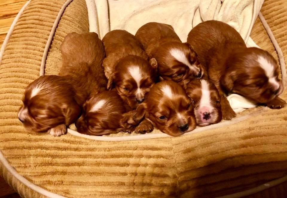 Trixie's pups.jpg