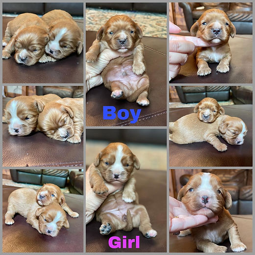 penny pups collage.jpg
