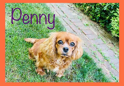 Penny collage_edited.jpg