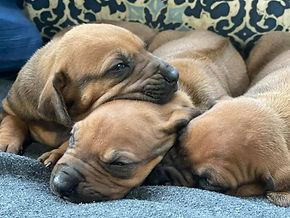 Cozy pups 1.jpg