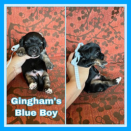 Gingham blue boy.jpg