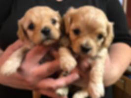 Polly pups.jpg