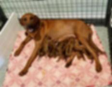 Tzeitel with pups 2.jpg