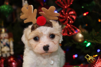 Viggo the Reindeer