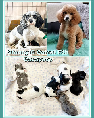 Stormy Comet and pups collage.jpg