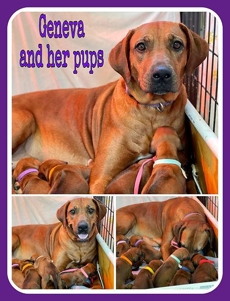Geneva and pups collage.jpg