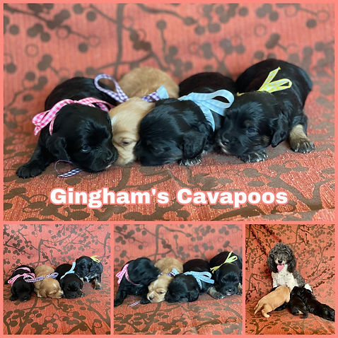 Gingham group collage.jpg