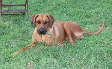 This is Annie. She is the stunning daughter of Etana and Aslan. This young lady has already had 2 beautiful litters for us!