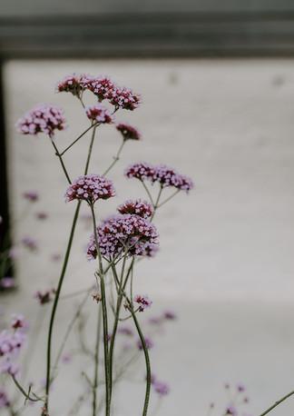Bloemen Jolie Logie