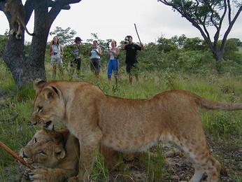 Walk-with-Lions-1.jpg