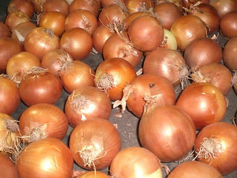 onion pic for site.jpg