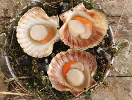 1/2 Shell Scallop 1kg, 반각 가리비관자 1kg