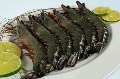 Jumbo Black Tiger Prawn, BBQ용 점보새우 800g
